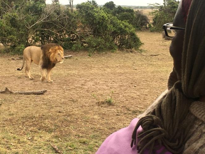Lion too close
