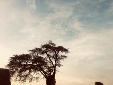 Mpala Tree